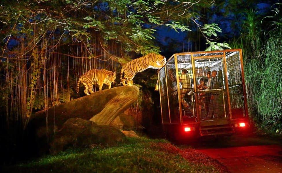 Explore Night Zoo At Ubud In Bali Thrillophilia