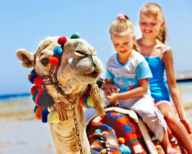 Camel Ride in Sand Dunes of Jodhpur Flat 34% off