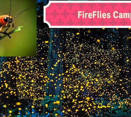Fireflies Camp at Bhandardara
