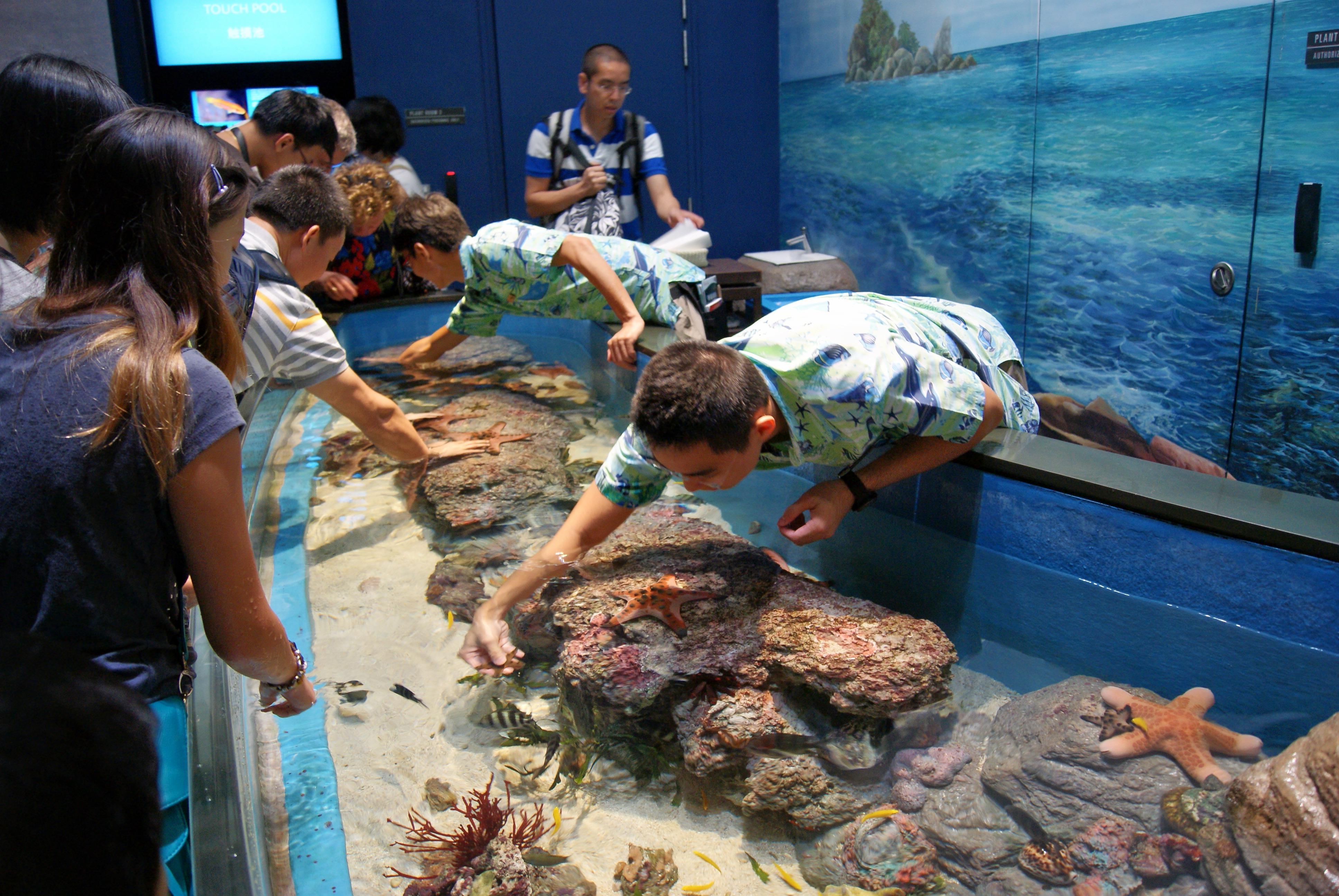 1465794073_discovery_touch_pool__s.e.a._aquarium__marine_life_park__resorts_world_sentosa__singapore_-_20130105-01.jpg
