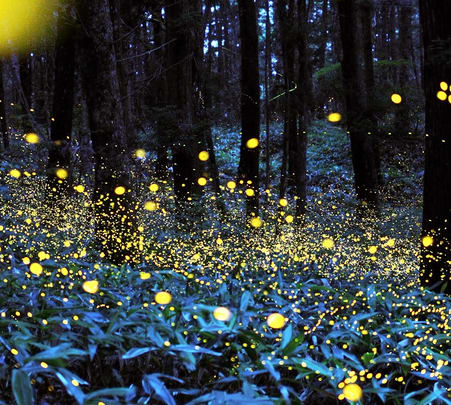 Fireflies Festival with Overnight Rural Stay at Dang in Gujarat
