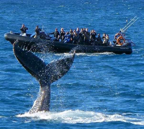 Whale Watching in Sydney