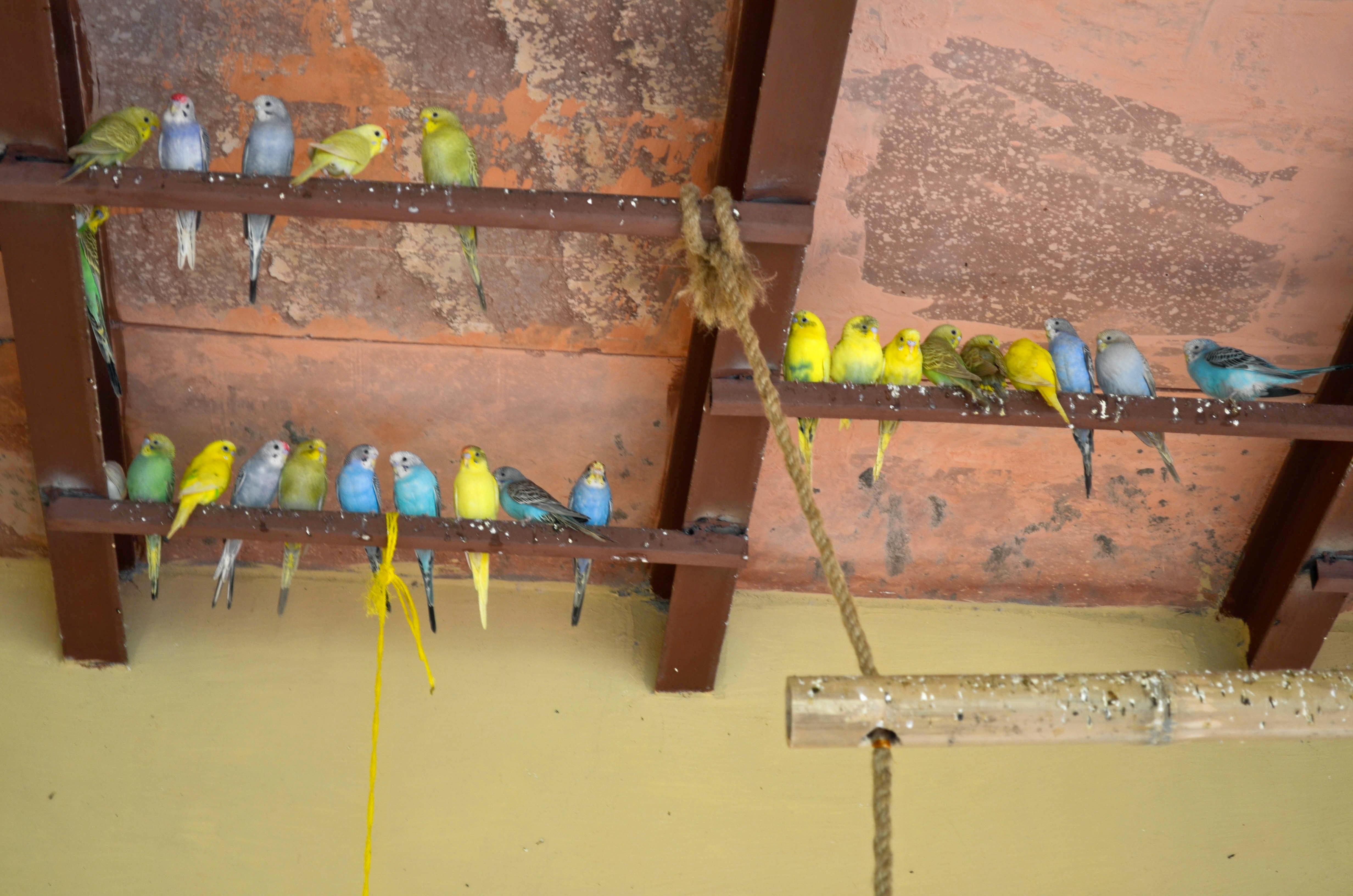 1540382312_birds___feeding_.jpg