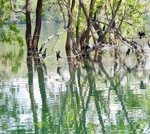 Kerala Wilderness Jungle Retreat
