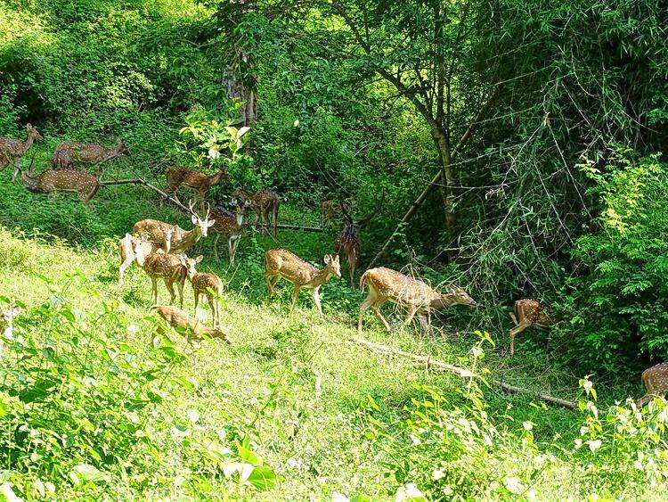 M_mudumalai_tiger_reserve__tamil_nadu_dsc00754.jpg