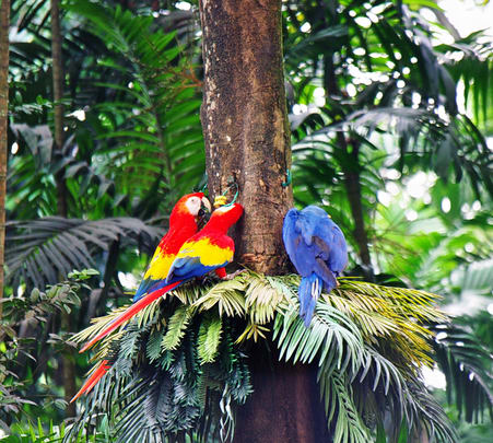 Ticket to Jurong Bird Park in Singapore
