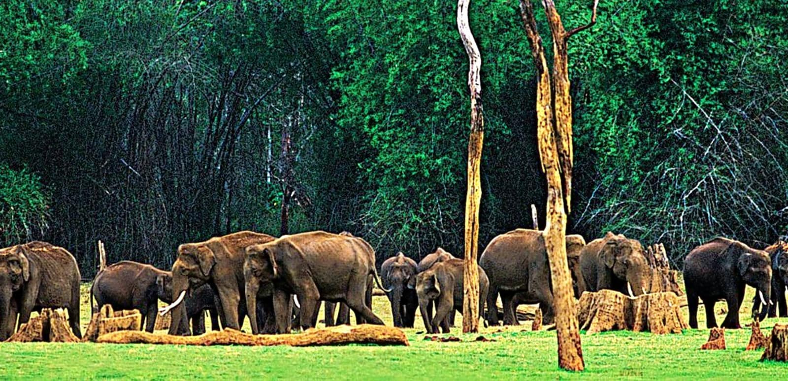 25 Popular Wildlife Sanctuaries In Kerala