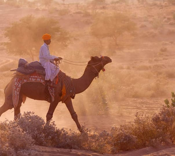 Camel Safari at Samsara in Rajasthan