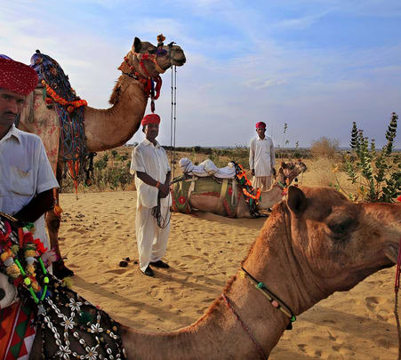 Farm Tour on Camel in Jodhpur
