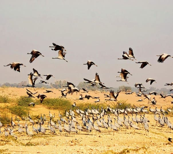 Bird Watching in Kicchan, Rajasthan