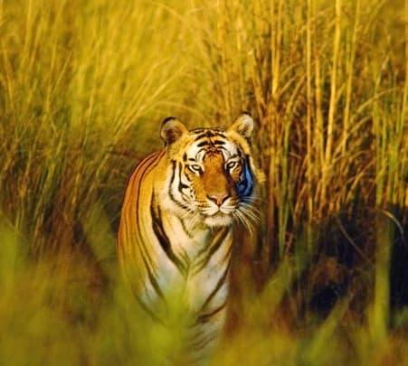 Orissa Wildlife Adventures
