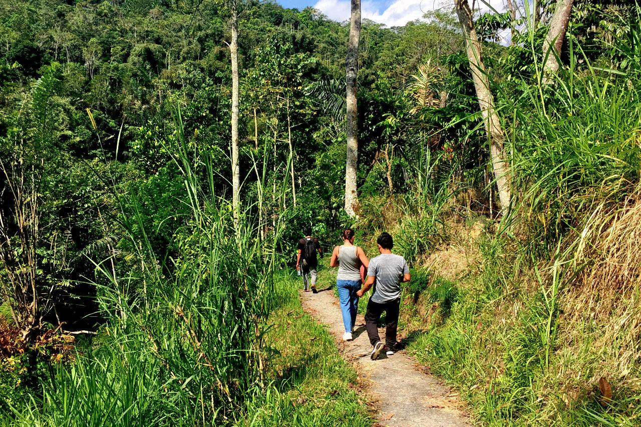 1587199544_bali-driver-and-guide-jungle-trekking-tour-4.jpg