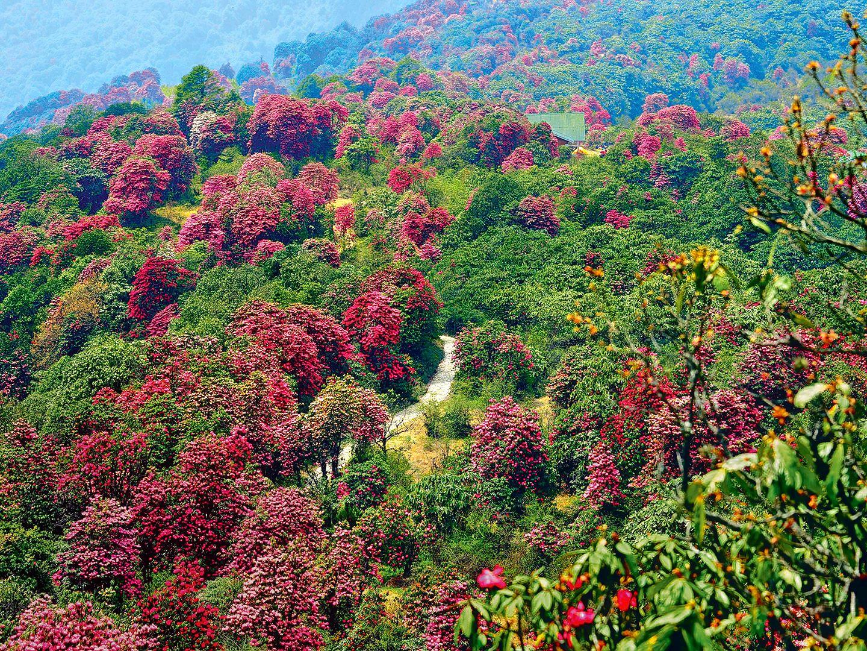 1592569466_barsey-rhododendron-sanctuary.jpg