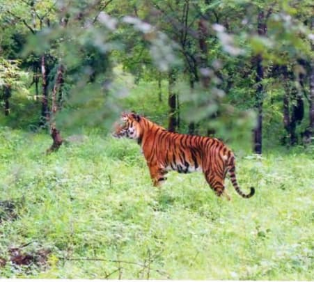 Brahmagiri Wildlife Sanctuary Safari I Book & Get 28% Off