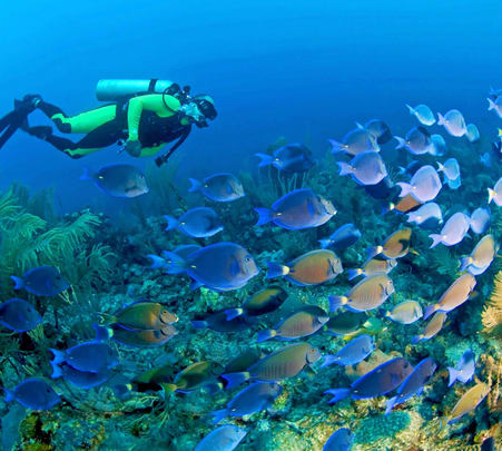 Mantanani Island Scuba Diving Experience Flat 20% off