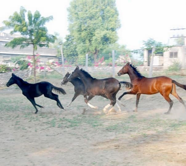 Horse Riding Trip at Ranakpur in Rajasthan
