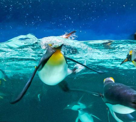 Melbourne Sea Life Aquarium & Legoland Discovery Ticket