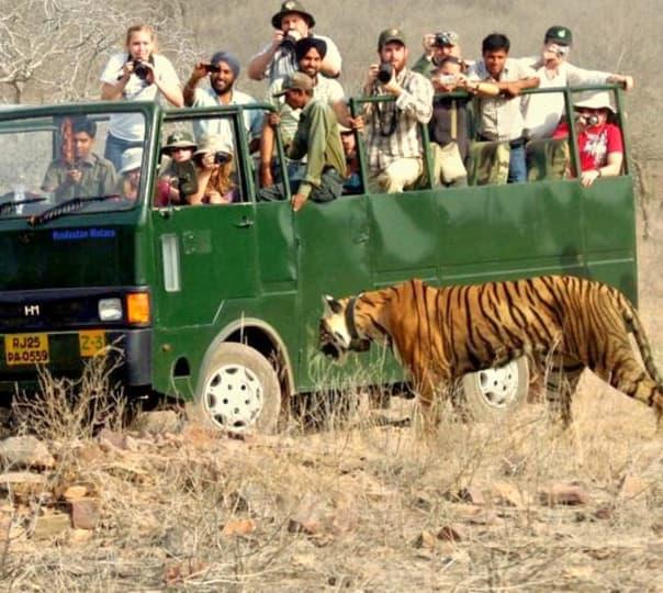 Jungle Safari with Saalvan Resort, Marchula
