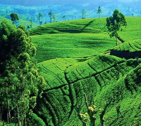 Day Tour to Nuwara Eliya in Sri Lanka