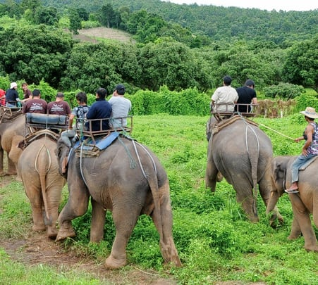 Elephant Bush Trekking in Pattaya
