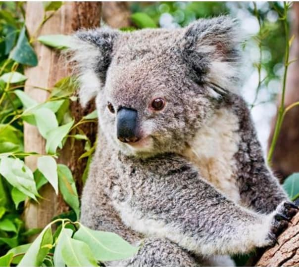 Yanchep National Park and Crystal Cave Tour at Perth in Australia