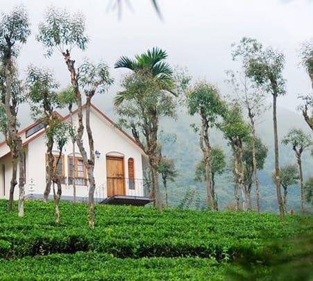 Wayanad Tea Plantation Stay Experience