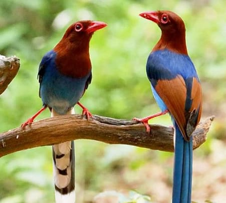 Bird Watching and Trekking in Udawatte Kele Sanctuary Flat 32% off