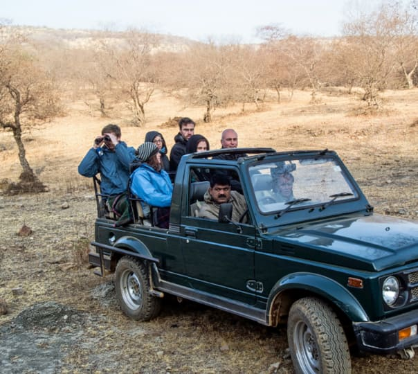 Wildlife Safari in Jaipur