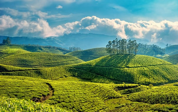 30 Best Places To Visit In Munnar In 2019