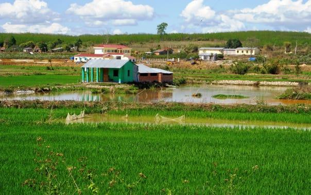 1462533971_rice_fields_in_vietnam.jpg
