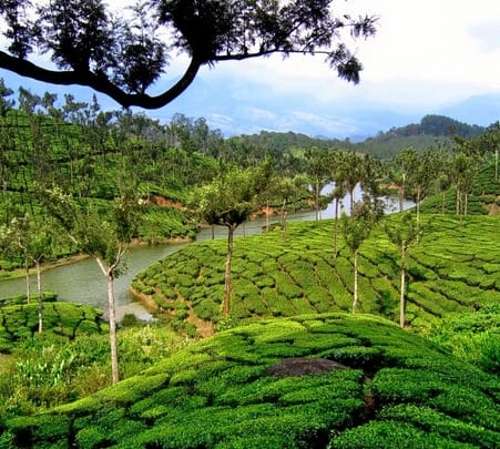 Kerala-Beach, Backwater & Tea Gardens Tour