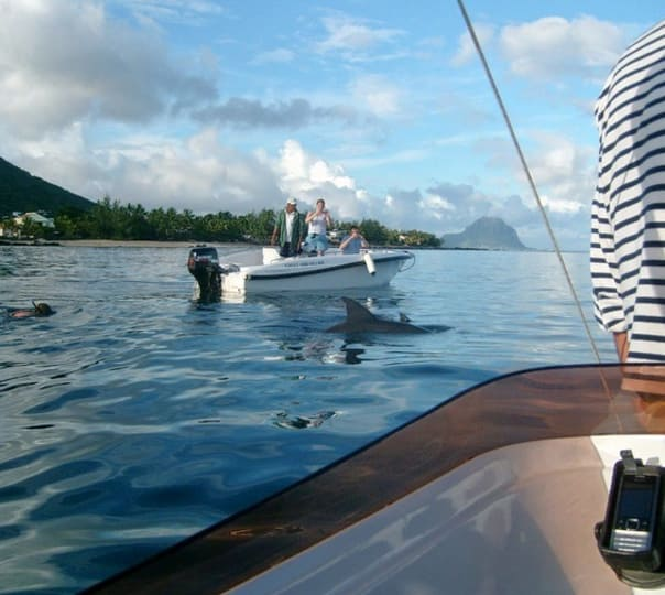 Dolphin Watching at Albion in Mauritius