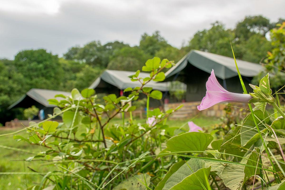1586532414_cottage_tents2.jpg