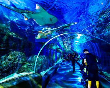 Sea Life Ocean World Bangkok - Flat 25% off