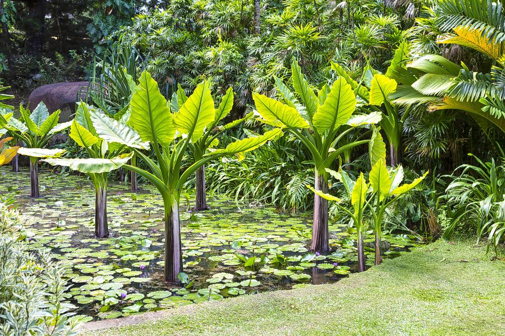 1597157222_victoria_botanical_gardens1.jpg