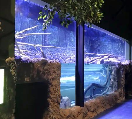 Cairns Aquarium Entry Ticket Flat 20% off