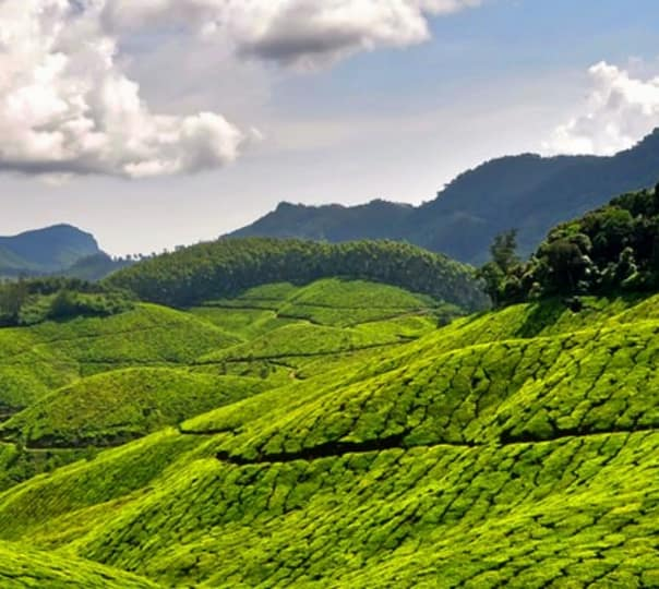 Tour the Hills and Backwaters of Kerala