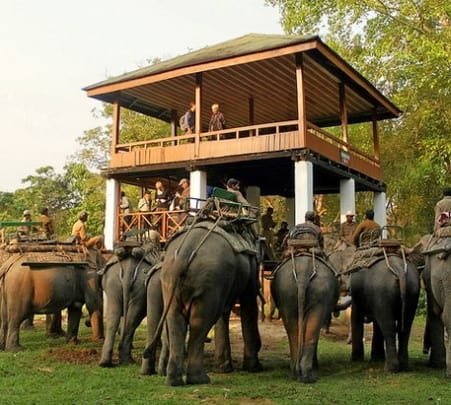 Kaziranga, The Enriched Wildlife Tour