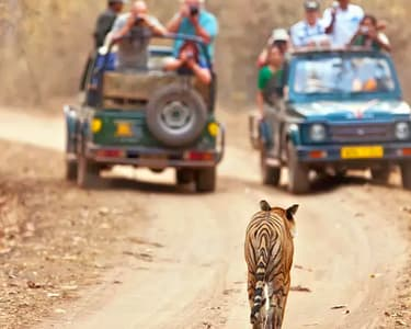 Camping with Safari & Village Experience at Kanha
