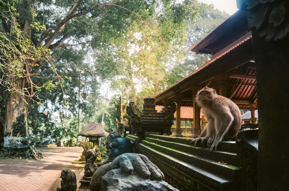 1593413429_monkey_forest1.jpg
