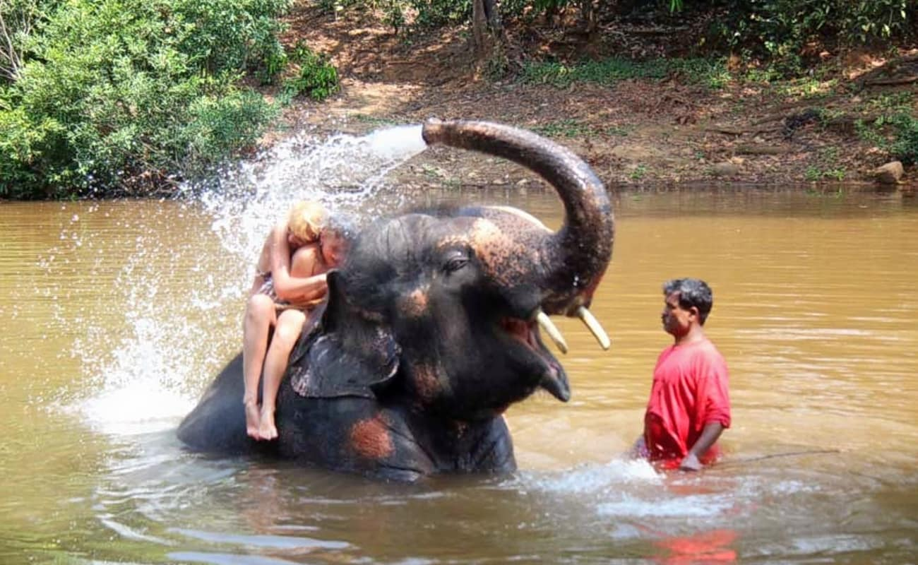 Elephant Splash And Wash At The Jungle Book In Goa