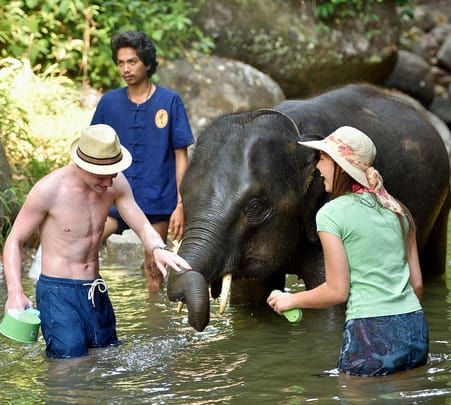 Experience Elephant Care in Phuket, Flat - 30% off
