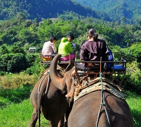 Elephant Riding & Bamboo Raft Cruise Adventure