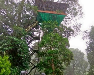 Camping and Tree House Stay in Wayanad