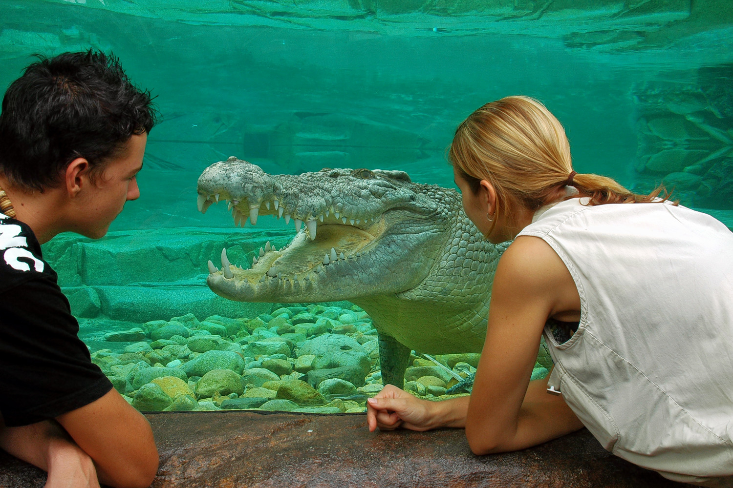 1598940208_cairns_zoom_and_wildlife_dome_goliath_boy_and_girl_(1).jpg