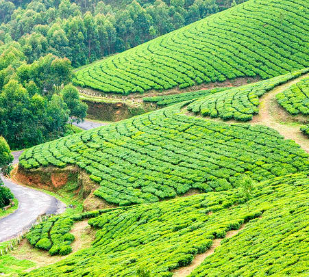 Tea Valley and Munnar Hill Station Tour