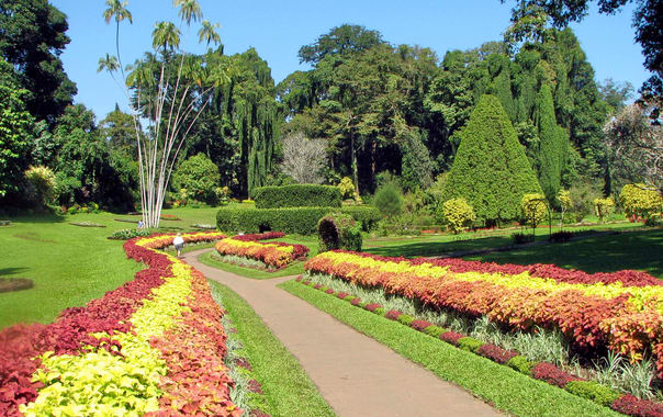 Botanical_garden_of_peradeniya_03.jpg