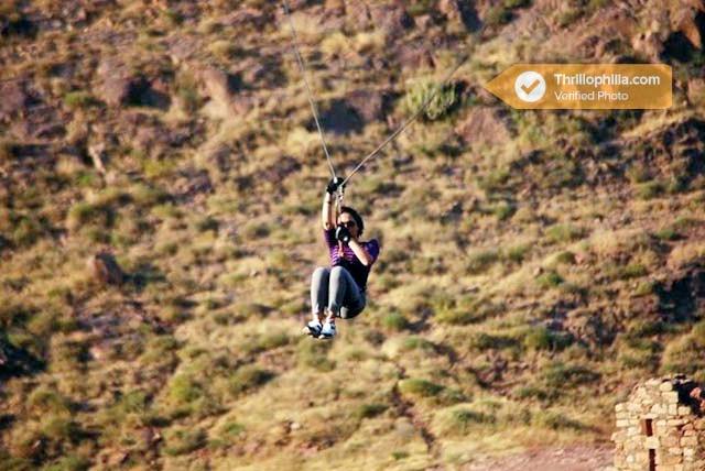 Jodhpur_flying_fox_(6).jpg