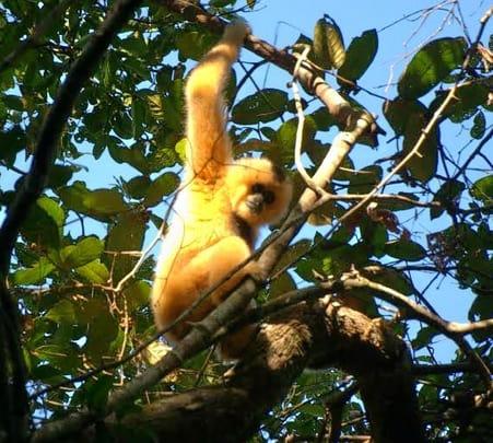 Jungle Trek in Veun Sai-siem Pang at Cambodia