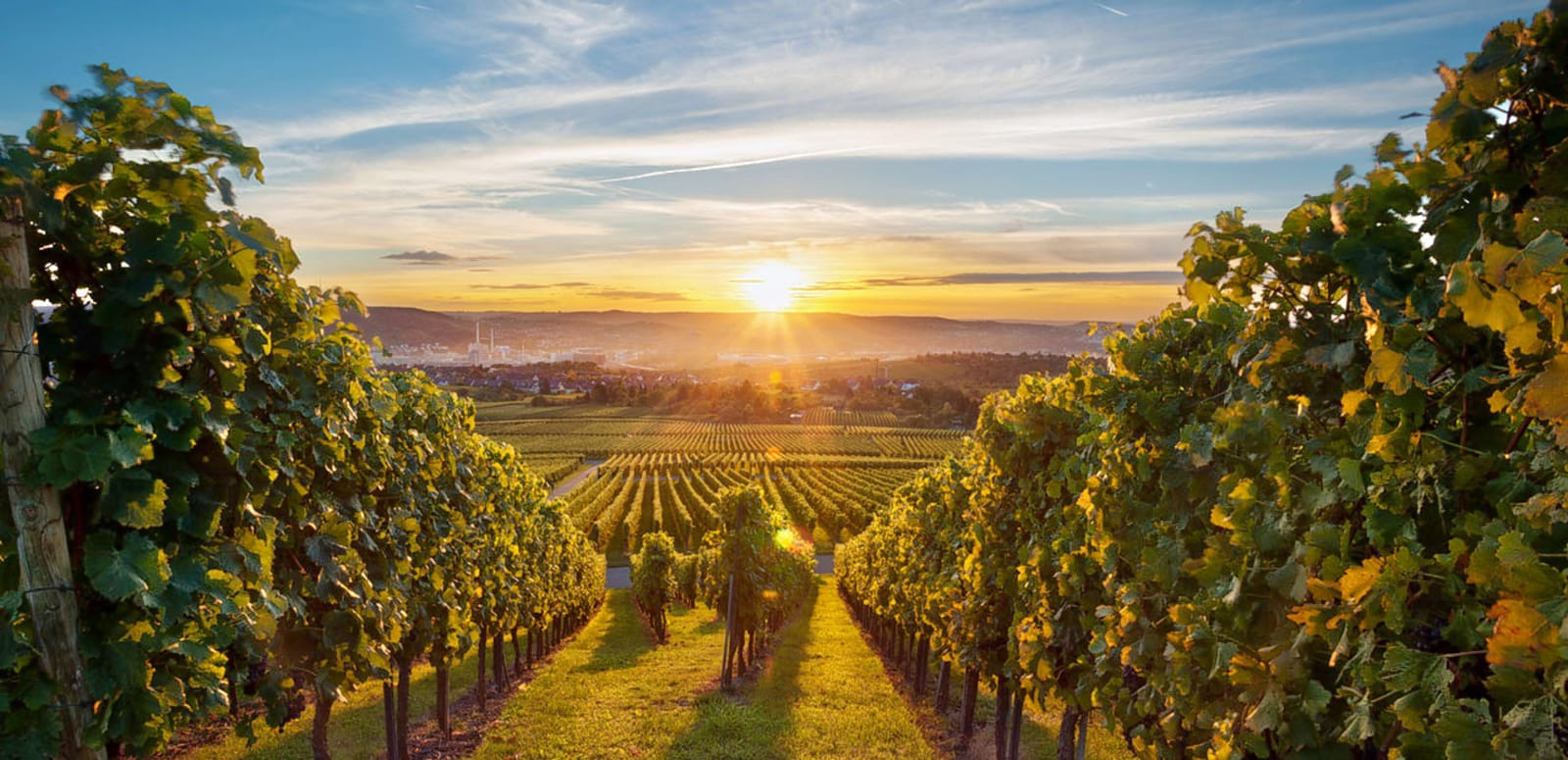 1488862812_wine-tours-feature-image.jpg